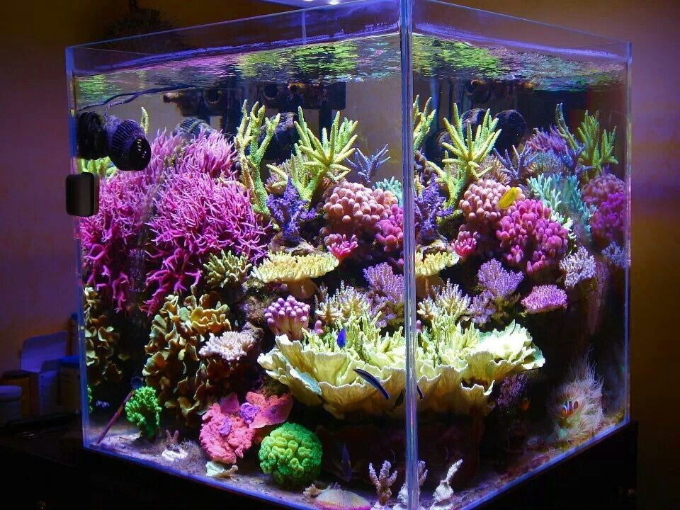 Awesome sps heavy cube el imet pinterest aquariums for Cube saltwater fish tank
