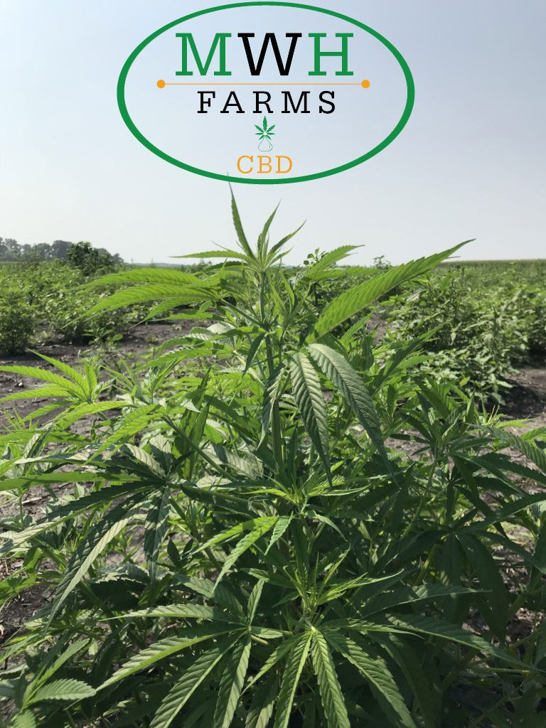 """Have you heard the line """"3000 Pound hemp biomass for sale at"""