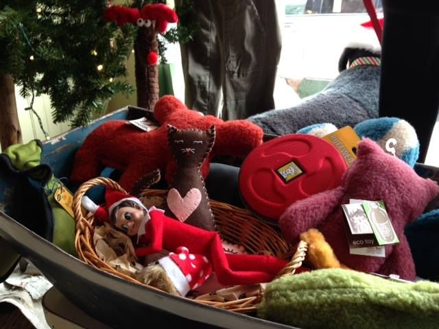"Sweet as Pie's ""Bad Kitty"" snuggling with Elf on the Shelf at Due East in Easton, MD www.pieisyummy.com"