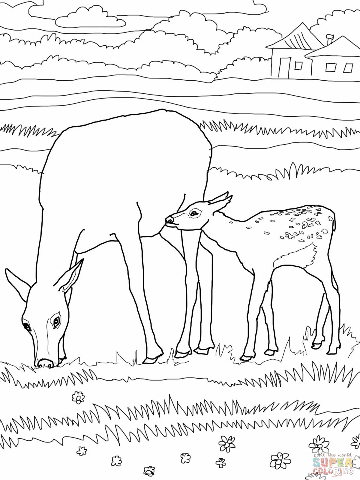 Letter E Elk Mommy And Baby Animal Coloring Page Horse