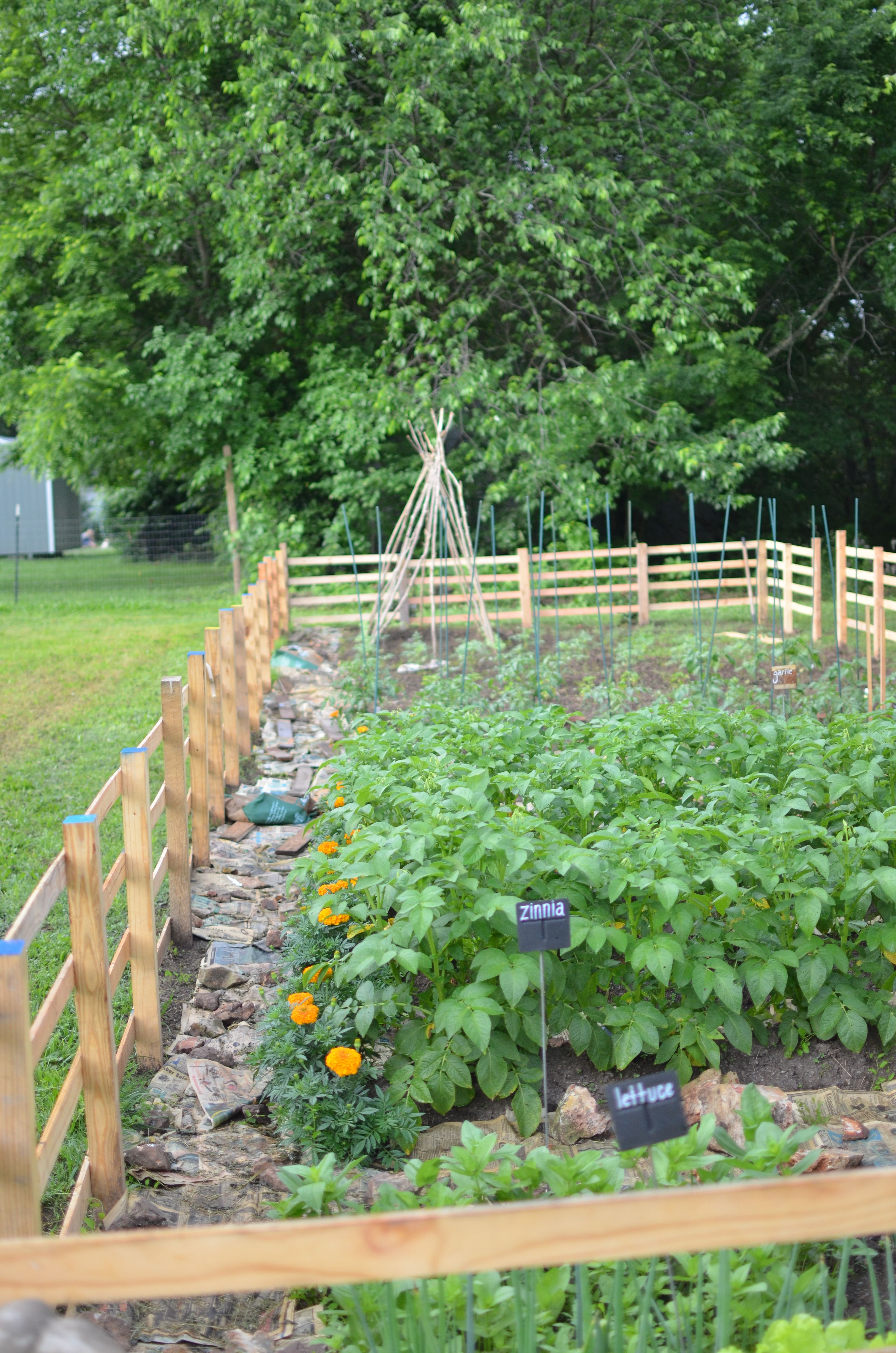 A Vegetable Garden In The Making Lay Newspaper Down To Kill The