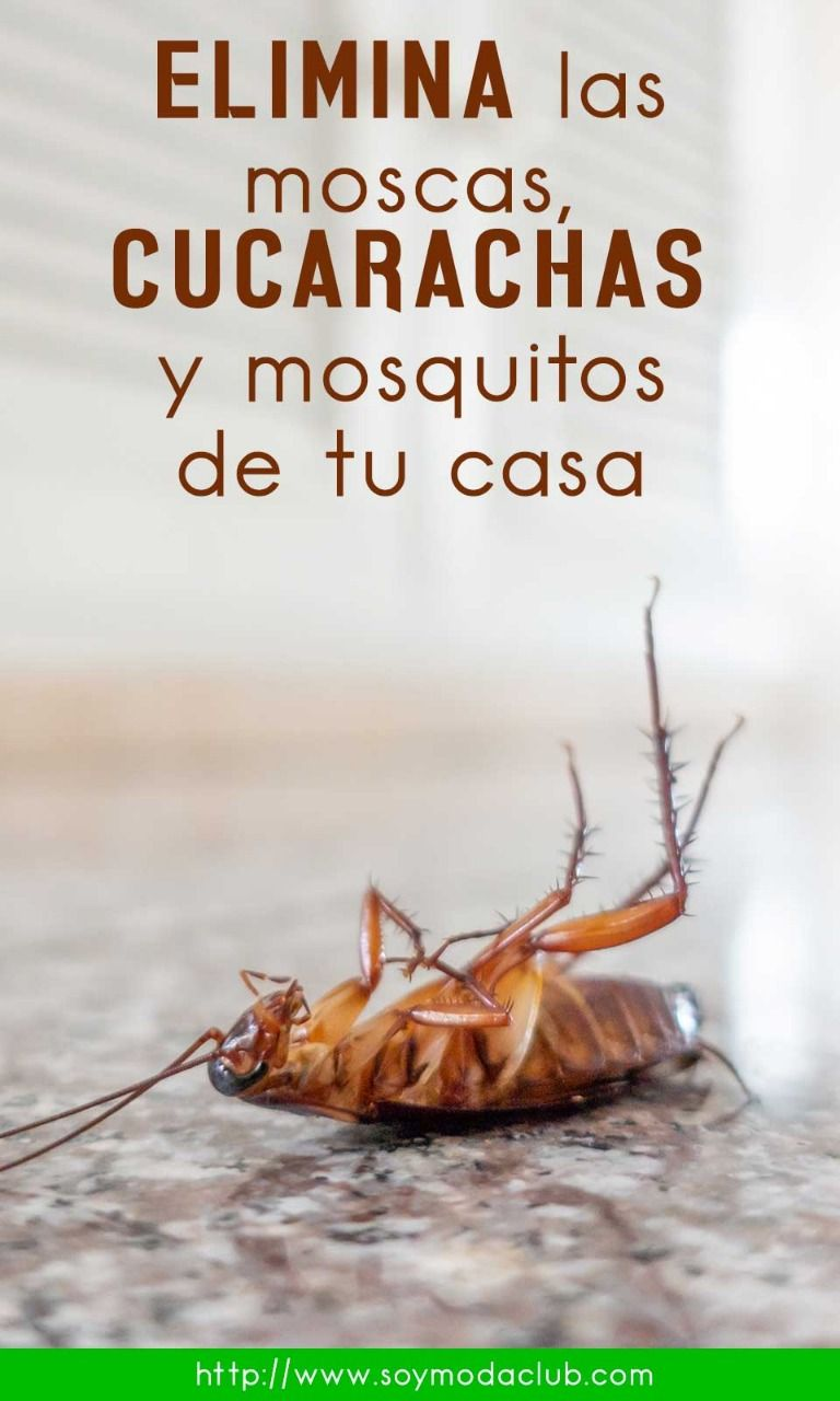 Como Acabar Con Las Moscas De Casa Elimina Las Moscas Cucarachas Y Mosquitos De Tu Casa Con