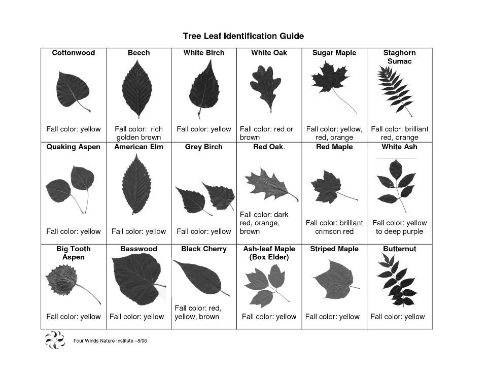 Identifying Trees Of East Tennessee With Photographs