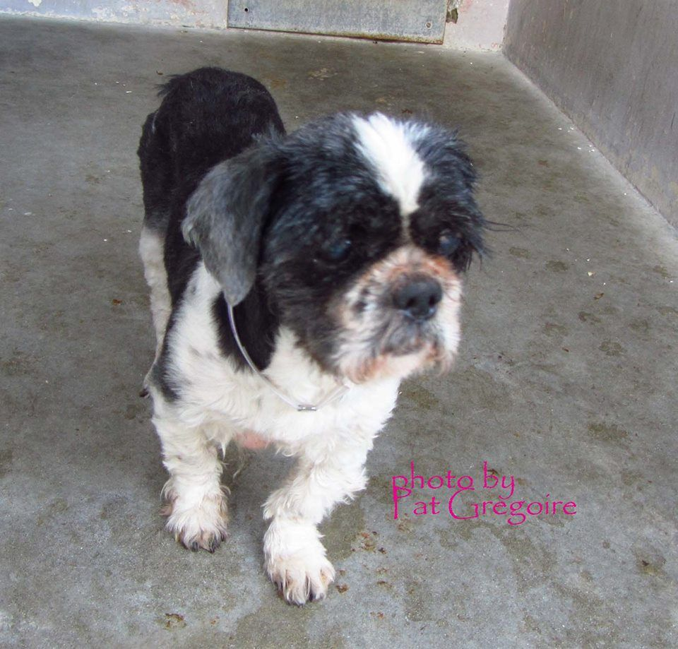 White Brick Baldwin Park S Design: SAFE --- A4772314 My Name Is Cupid. I Am A 12 Yr Old
