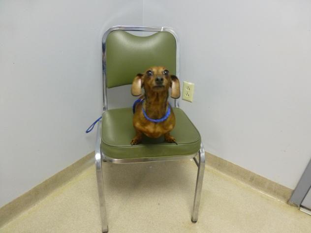 Adopt Chloe 303 On Dogs Up For Adoption Adoption Dog Control