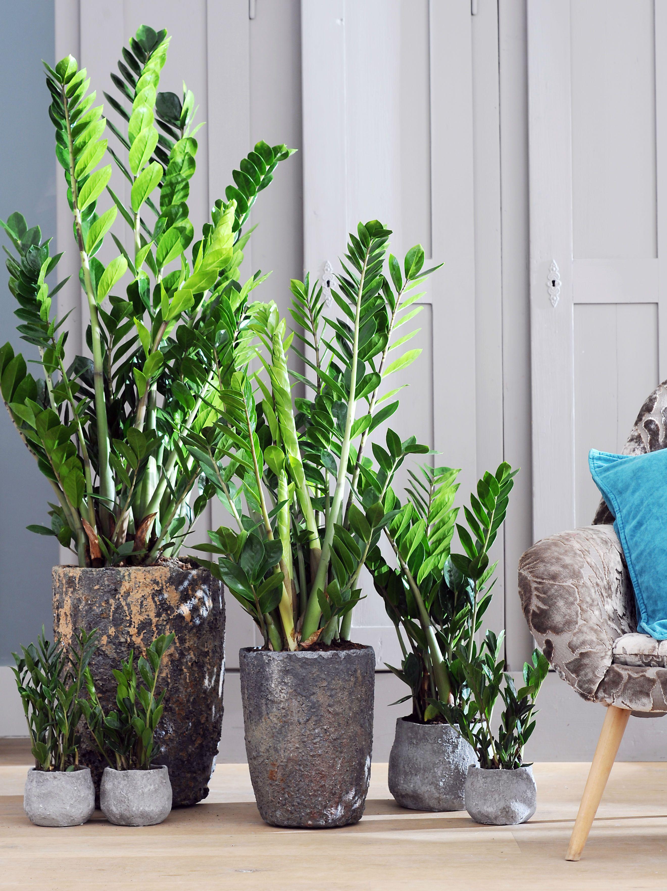 Le Pot Parfait Pour Votre Plante Indoor Plants Plants