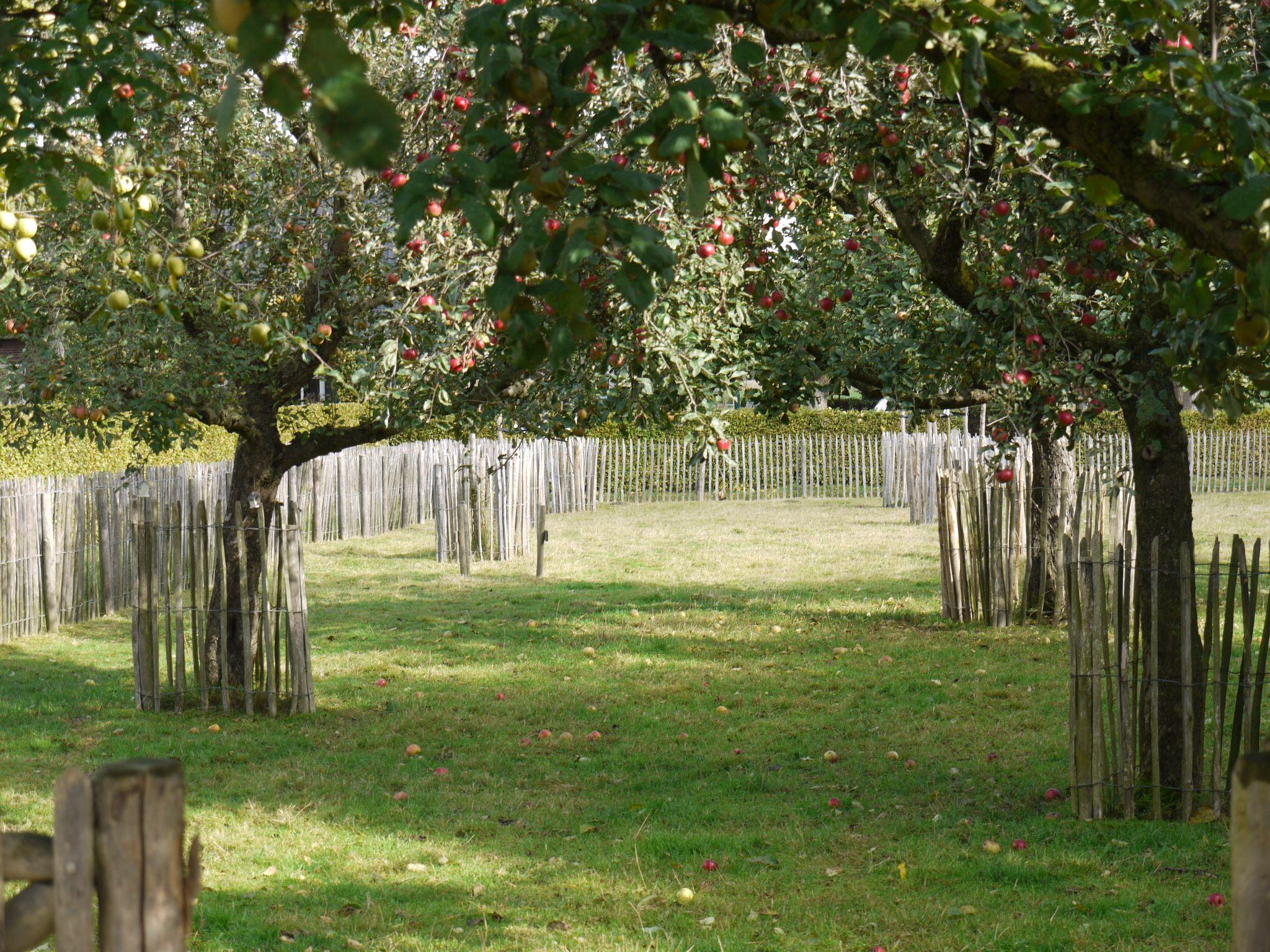 Onze boomgaard die elke dag weer voor een beetje geluk zorgt.