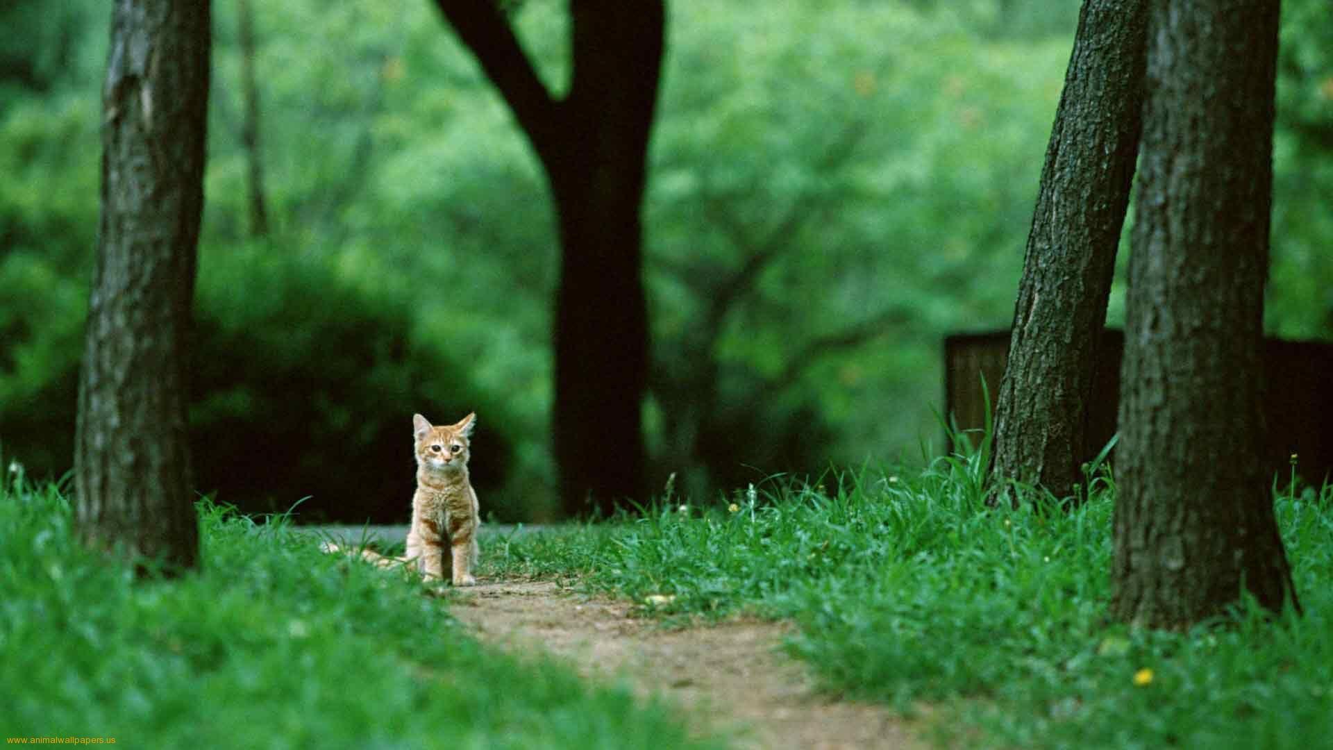 Chromebook Backgrounds 26330 High Resolution Slowall Com Animal Wallpaper Animals Cat Wallpaper