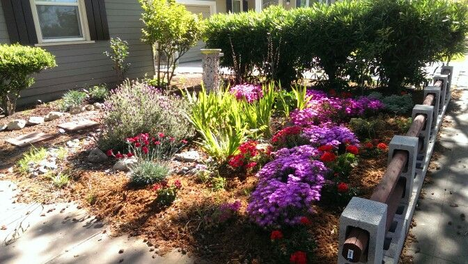 Ice plants in bloom 4/15