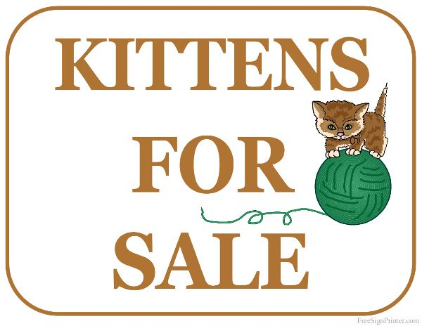 Printable Kittens For Sale Sign Kitten For Sale For Sale Sign