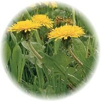 Your Garden Herb