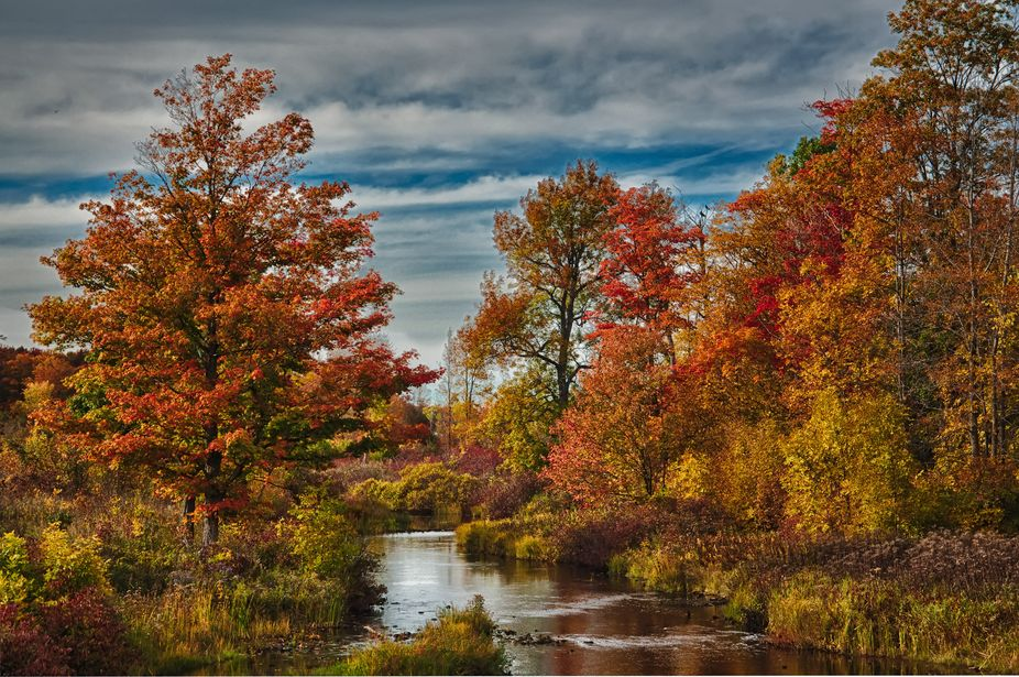 Ontario Fall Colours - Owen Sound area