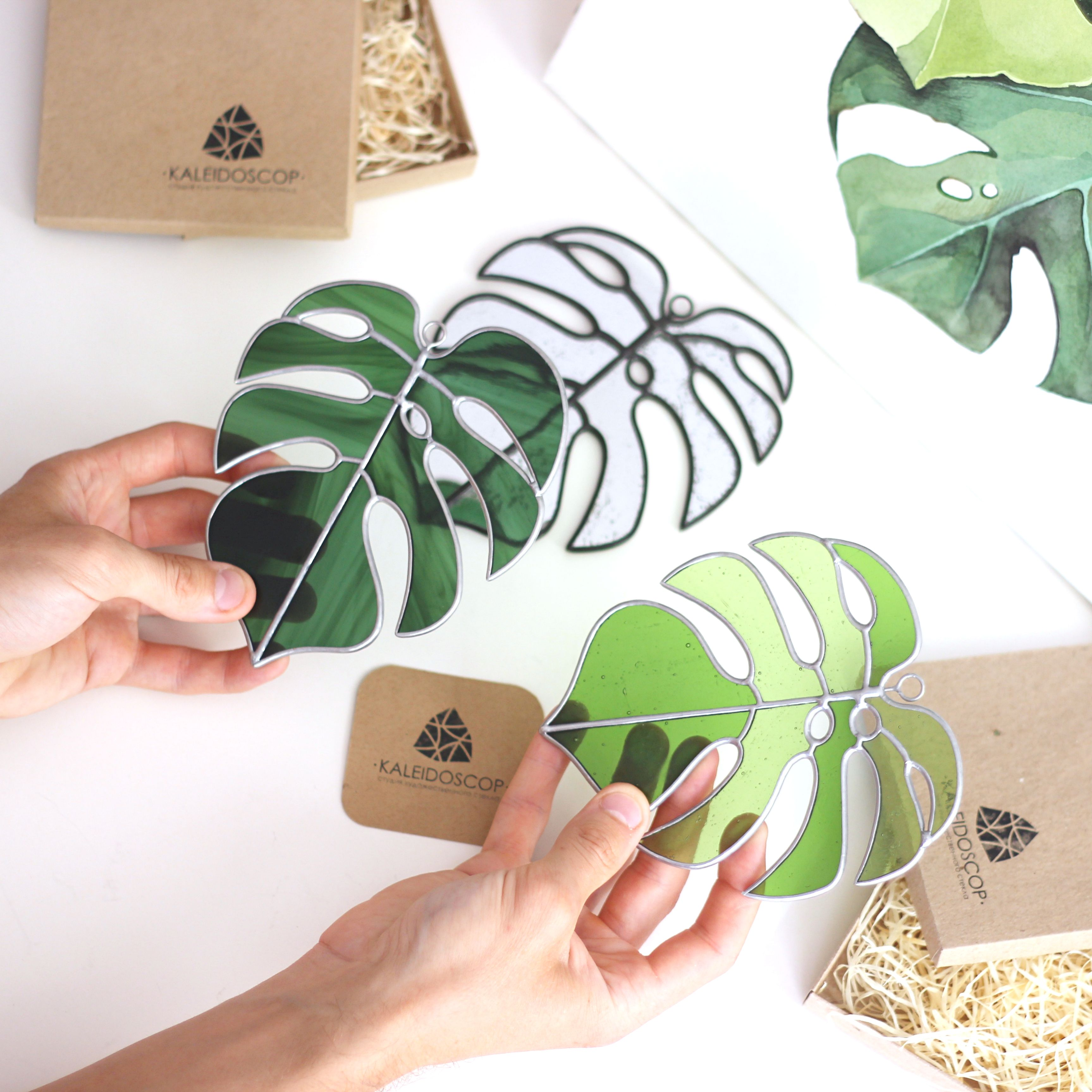Monstera -   16 plants Decor glass ideas