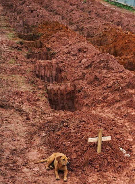 """Un cane chiamato """"Leao"""" siede per il secondo giorno consecutivo sulla tomba della sua padrona, morta durante la disastrosa frana del 2011 vicino Rio de Janiero"""
