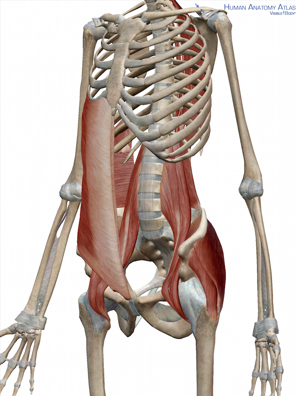 Everything you need to know about your core muscles | Pinterest ...