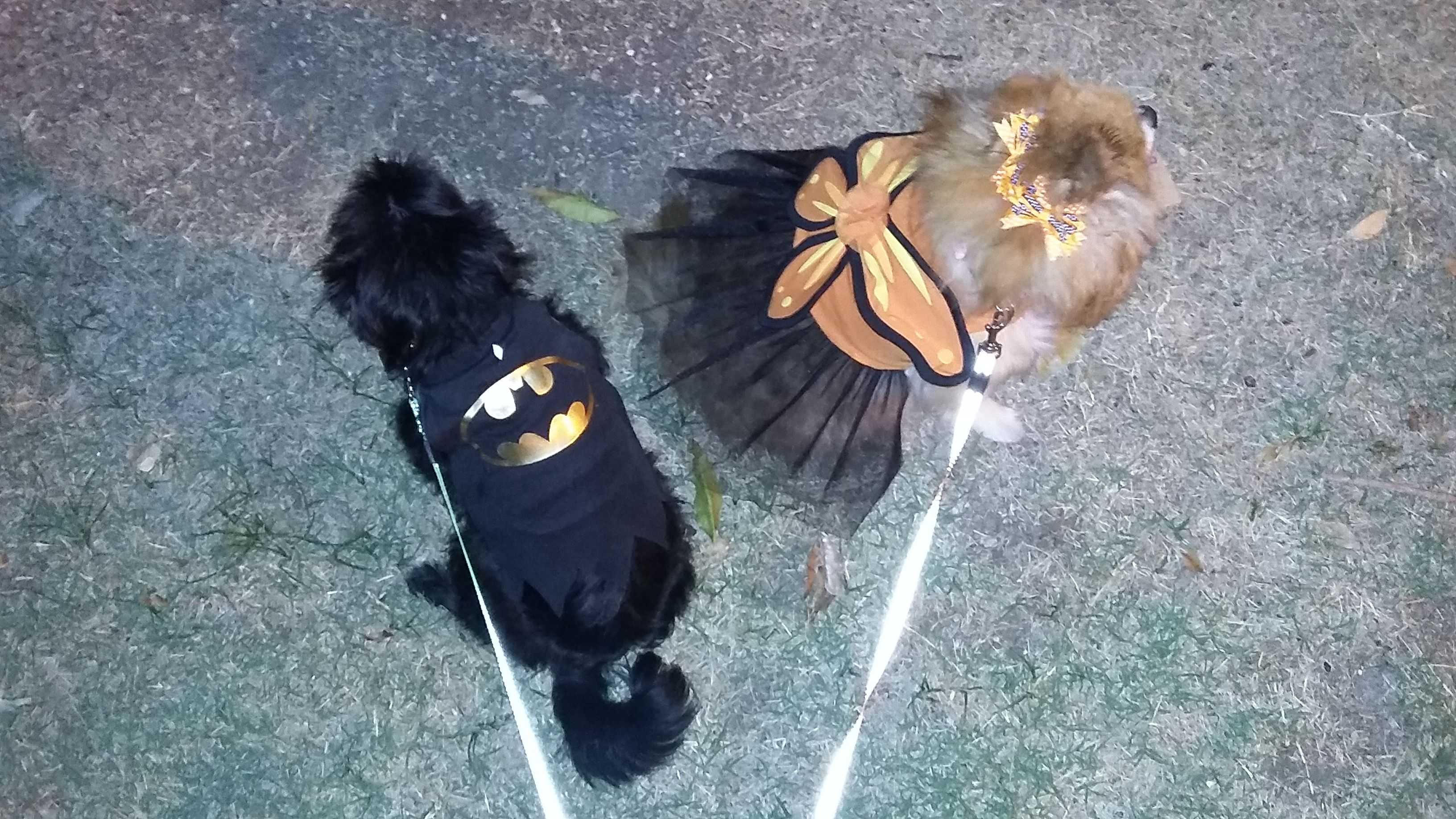 Knight and Diva, Batman, the dark Knight Rising  and Orange Butterfy Princess