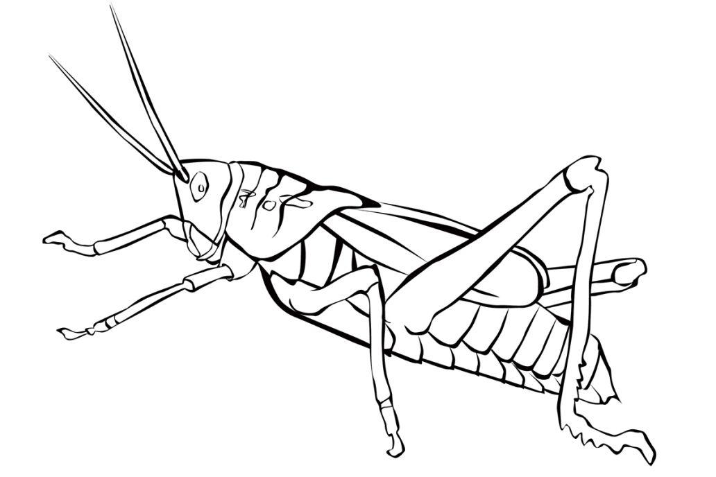 Ausmalbilder Kostenlos Insekten Ausmalbilder Ausmalbilder Gratis Ausmalen