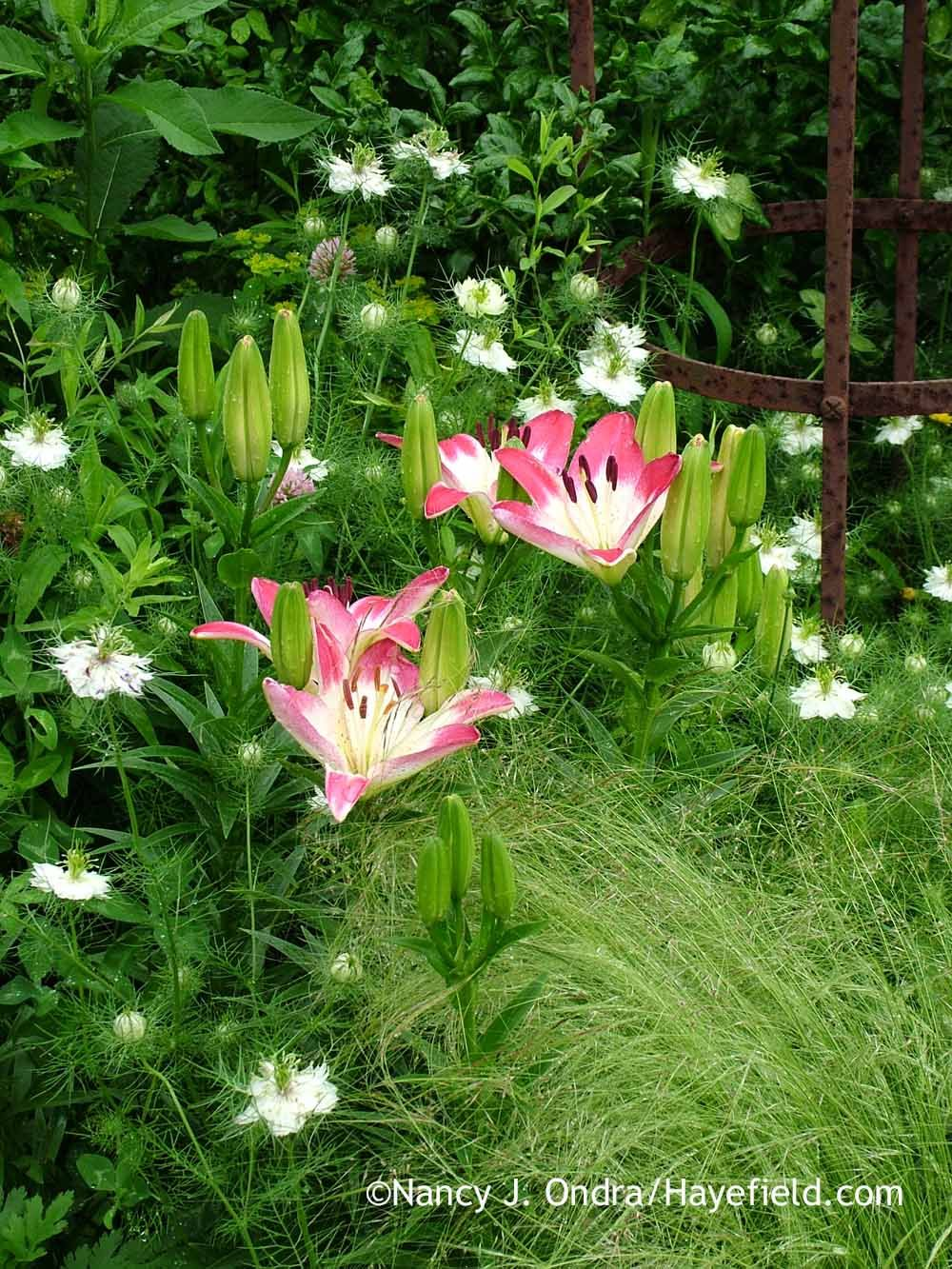 In Part 1 of Matchmaking with Bulbs, I covered some ways of choosing flowering and foliage partners to create beautiful combinations with bulbs. Another way to choose companions is consider them fr…