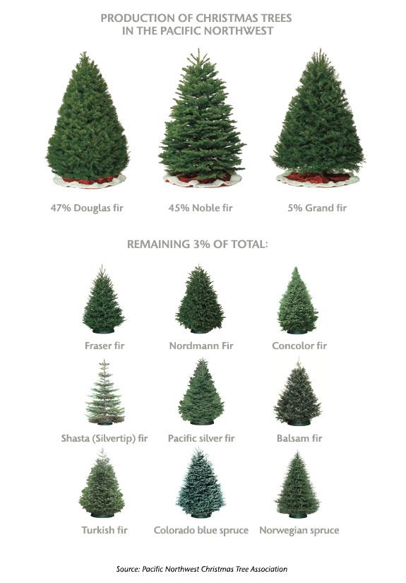 Christmas Tree Types.Ask Mr Christmas Tree Christmas Christmas Tree