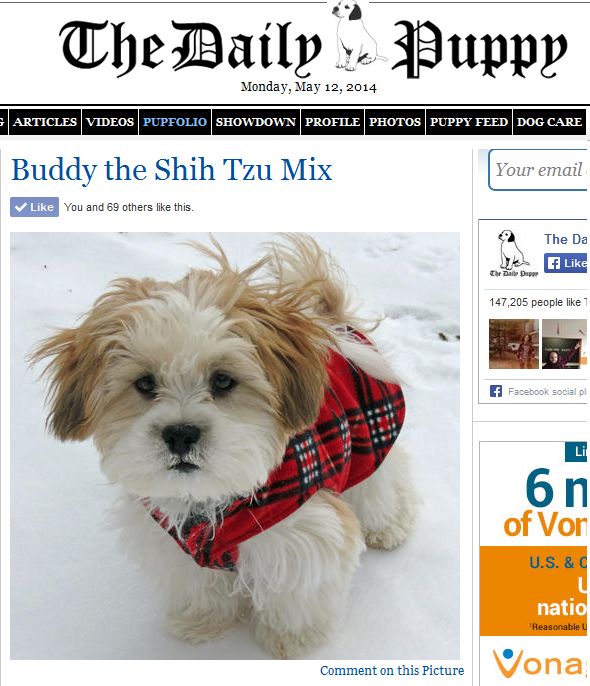 "Buddy is becoming an internet sensation!  He was featured on ""The Daily Puppy!"" http://www.dailypuppy.com/puppies/buddy-the-shih-tzu-mix_2014-05-09"