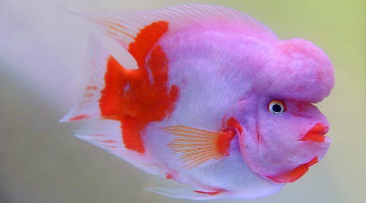 Live costa rica beautiful tropical 720 400 pixels for Beautiful tropical fish