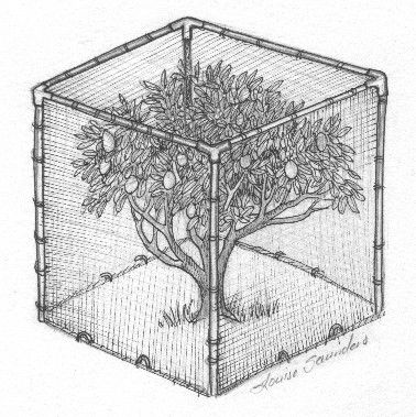 Planting And Caring For Fruit Trees