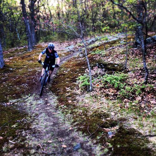 Singletrack Through Mossy Woods Whipple Hill Lexington Ma