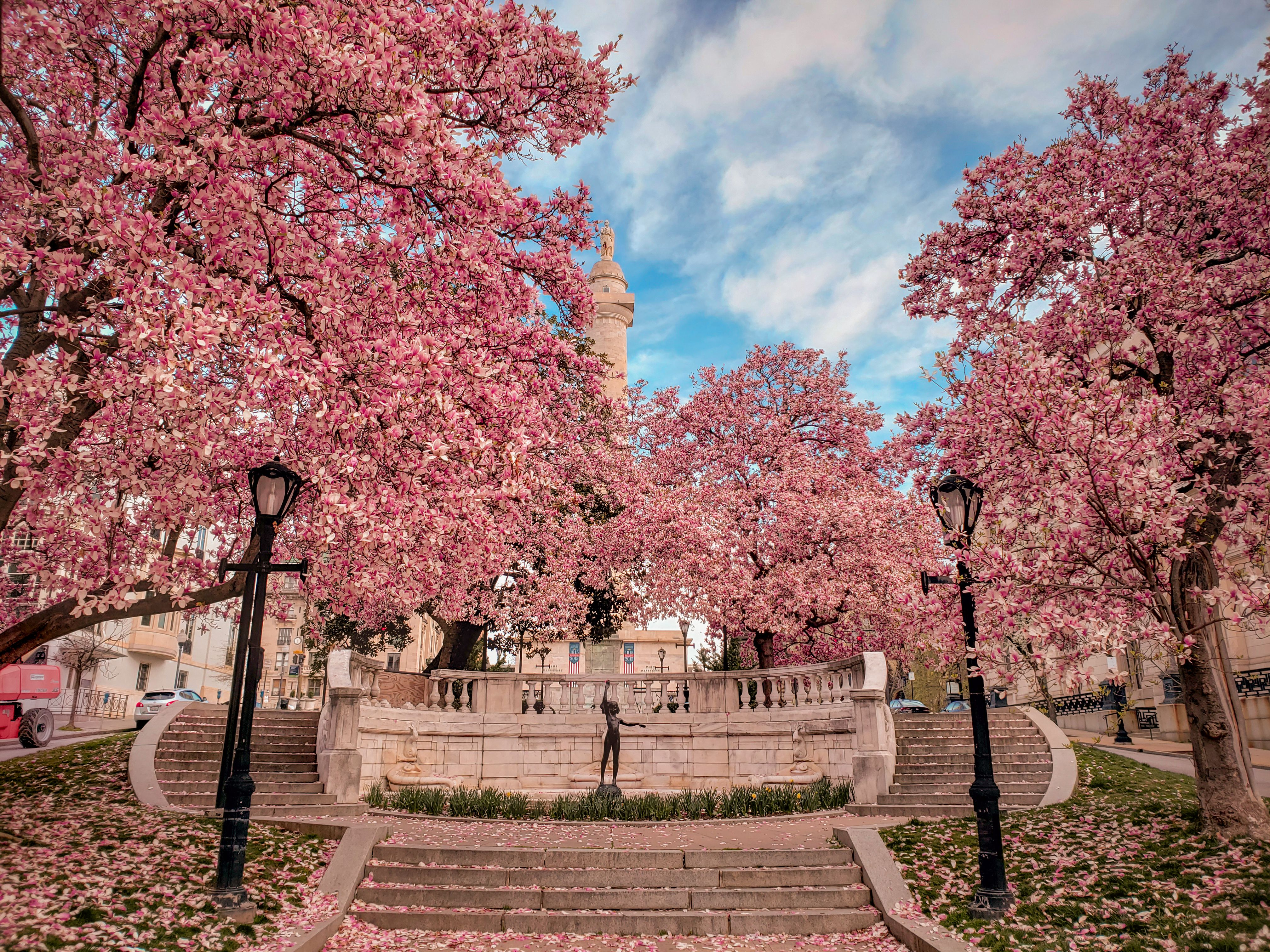 Pin By Ly Huynh On Beautiful Sceneries Cherry Blossom Festival Dc Cherry Blossom Festival Cherry Blossom