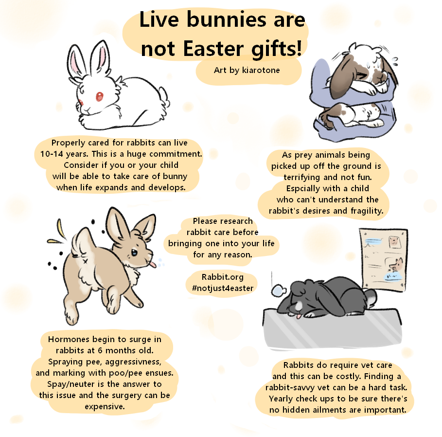 Live Bunnies Are Not Easter Gifts With Images Animal Years Easter Gifts Bunny