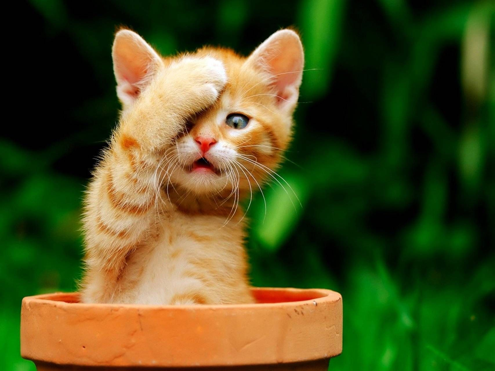 Download Funny Kitten Wallpaper By Hende09 1e Free On Zedge Now Browse Millions Of Popular Animals Wallpapers And Rin Foto Kucing Lucu Kucing Anak Kucing