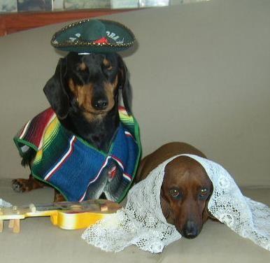 Dear Abby Pets In Halloween Costumes Baby Dachshund Weenie
