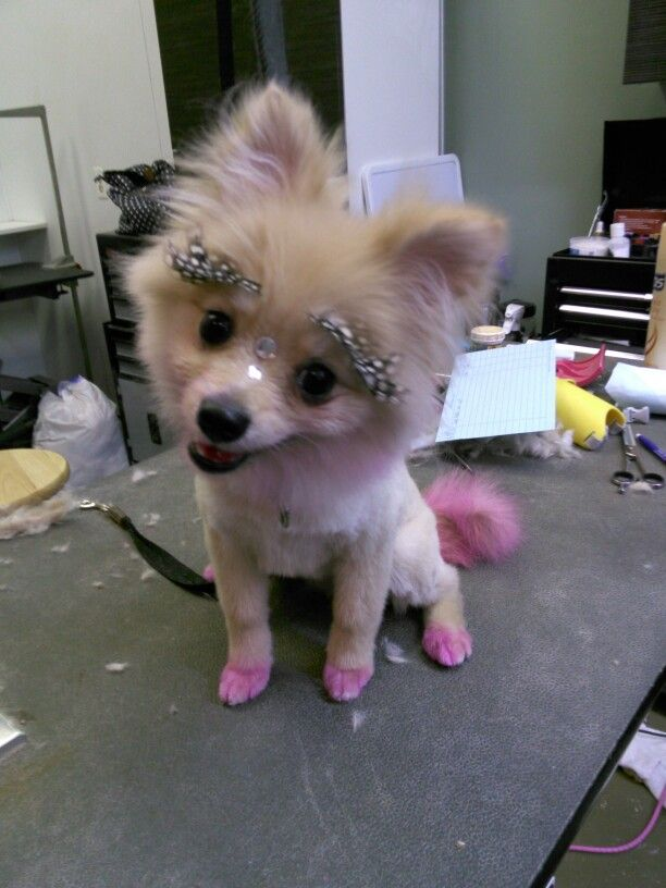 Pin By Cheryl Grain On I Live To Groom Pink Dog Cat Grooming Pet Grooming