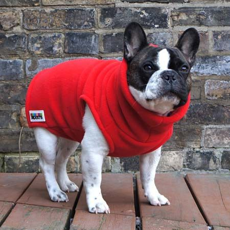 Boys Turtleneck Red French Bulldog Pug Fleece Sweater French