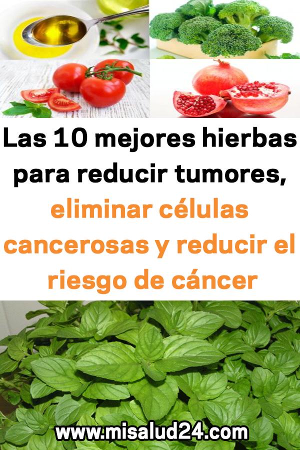 Las 10 Mejores Hierbas Para Reducir Tumores Eliminar Células Cancerosas Y Reducir El Riesgo De Cáncer Spiderman