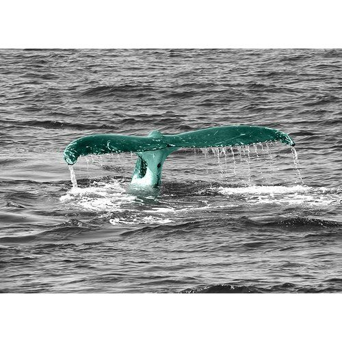 Photo of East Urban Home glass picture Animals Whale Tail, photo print in teal   Wayfair.de