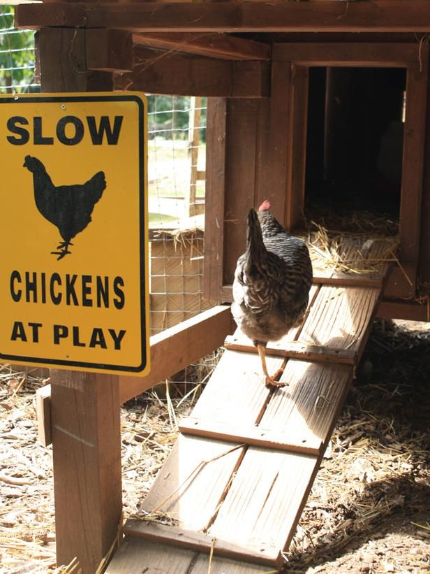 Chicken House Aves De Corral Gallineros Gallinas