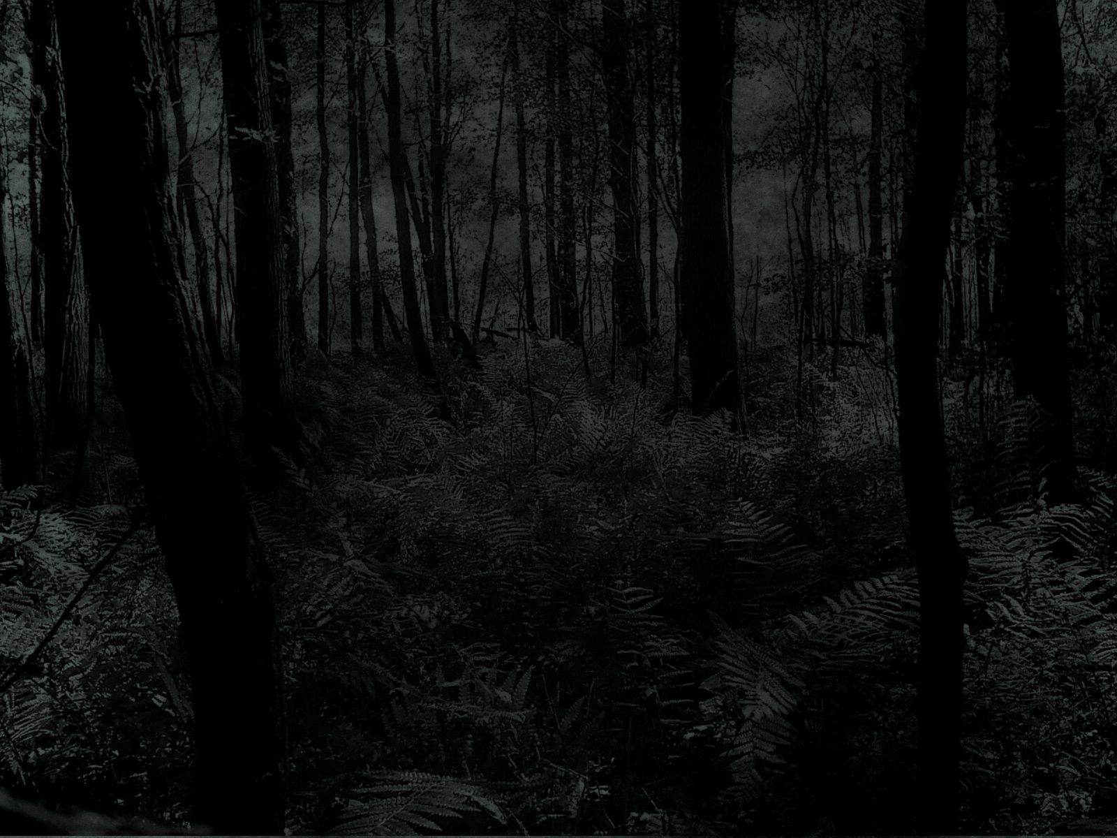 Dark woods picture hd dark woods picture dark woods pictures hd - Dark Woods Background Hd