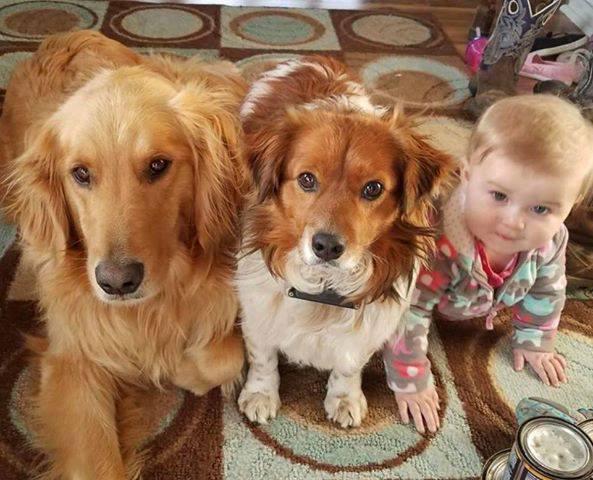 Patriots For Pets Pet Rescue Animal Shelter Clear Lake Iowa Mason City Ia Animal Shelter Pets Animal Behaviorist