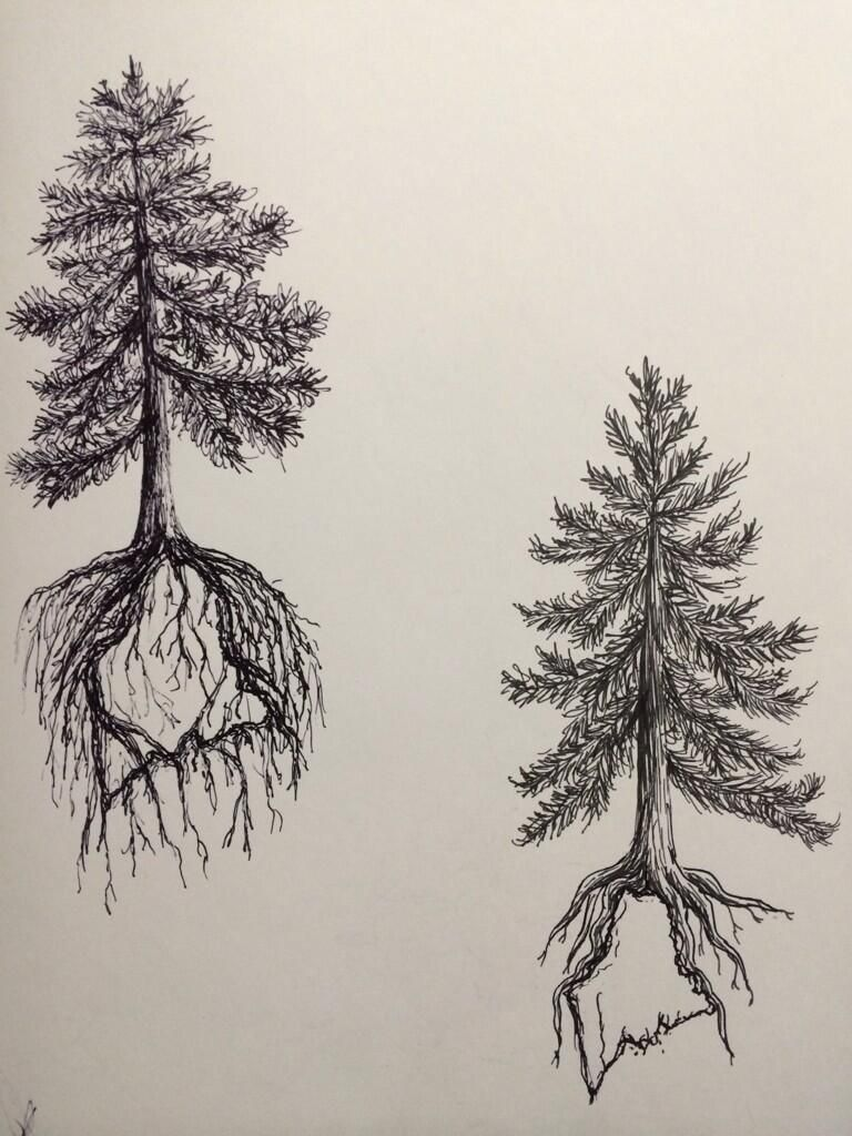 Pine Tree State Tattoo Design Two By Ramble Inthe Roots 19 28 Feb Tree Roots Tattoo Maple Tree Tattoos Roots Tattoo