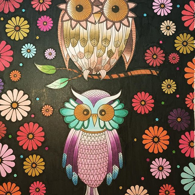 Cute owls colouring page which has been coloured in by
