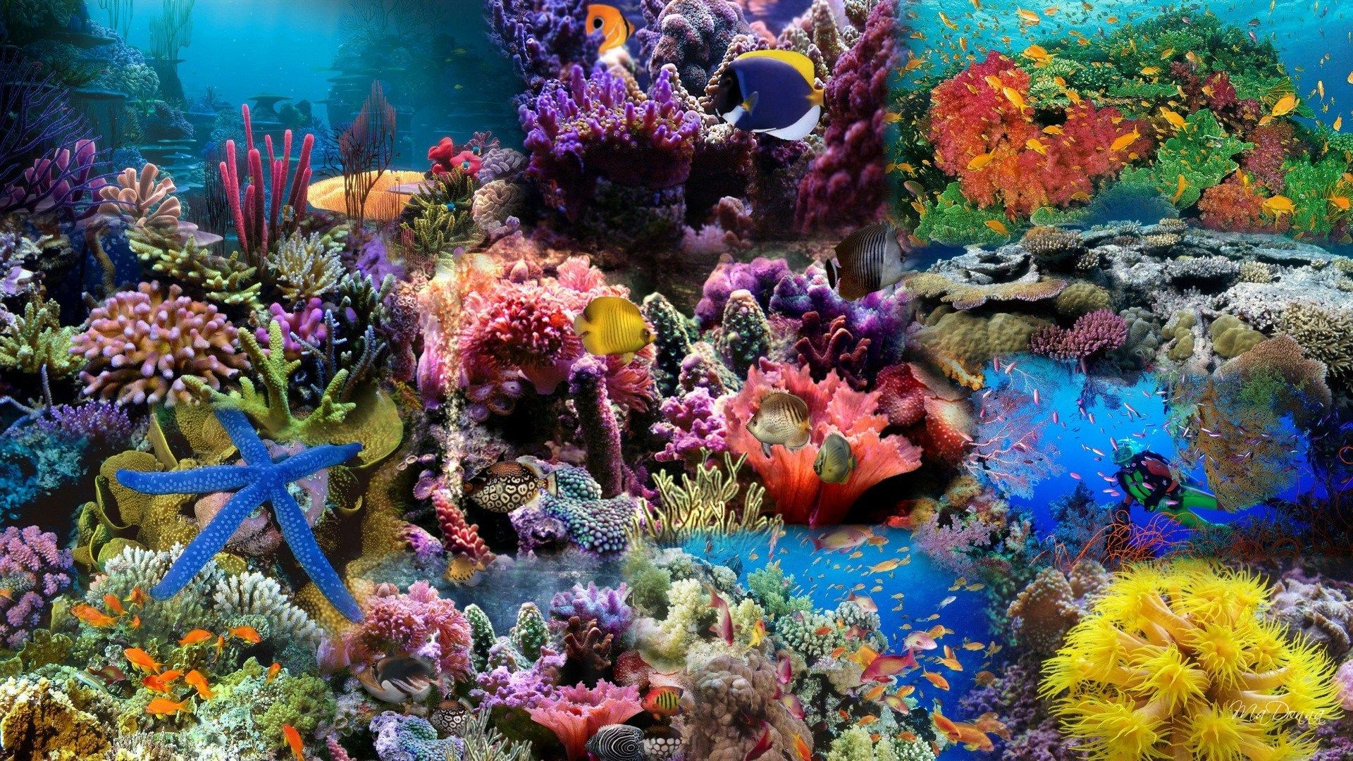 Aquarium Background With Several Fishes And Sharks Stock Footage