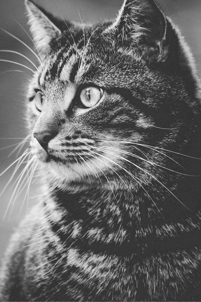 Cats Reddit id808677270 Cat care, Cat in heat, Cats