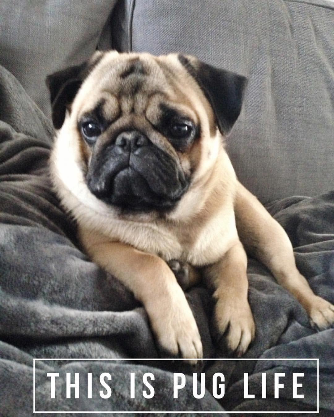Polite Understudied Best Dog Training Tricks Look At These Guys