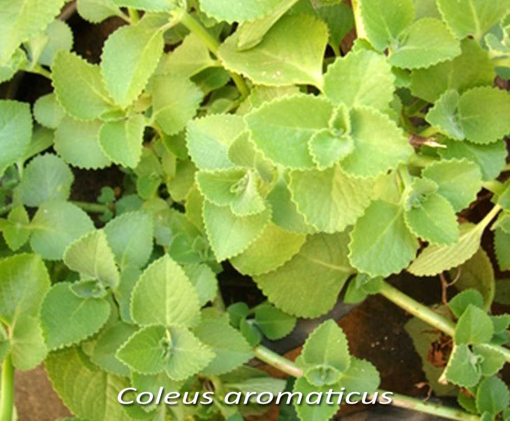 Image Result For Medicinal Plants Names Medicinal Plants Plants Plant Leaves
