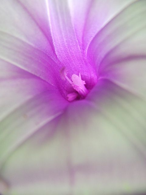 flower by 劉俊余