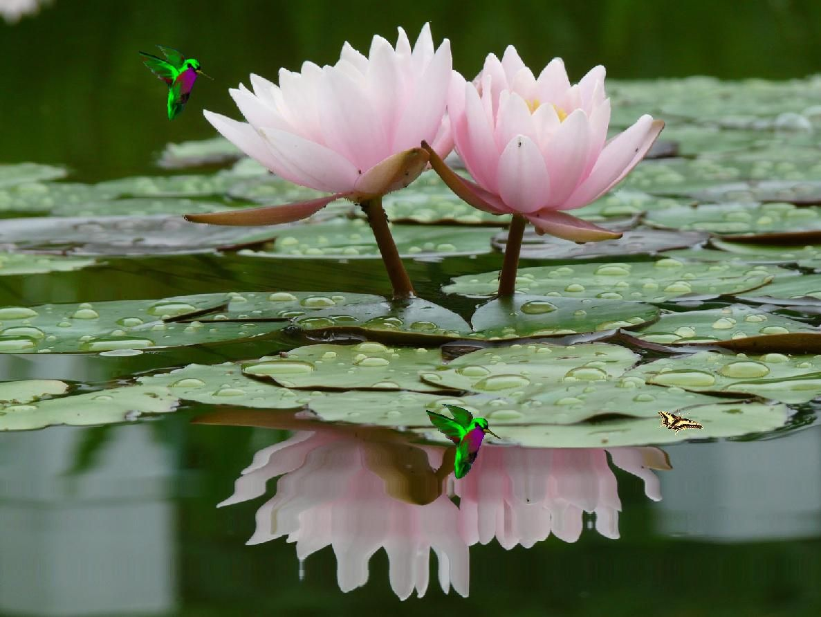 How to make a lotus flower simple version and origami versions how to make a lotus flower simple version and origami versions plus why are they so special in hinduism and buddhism izmirmasajfo
