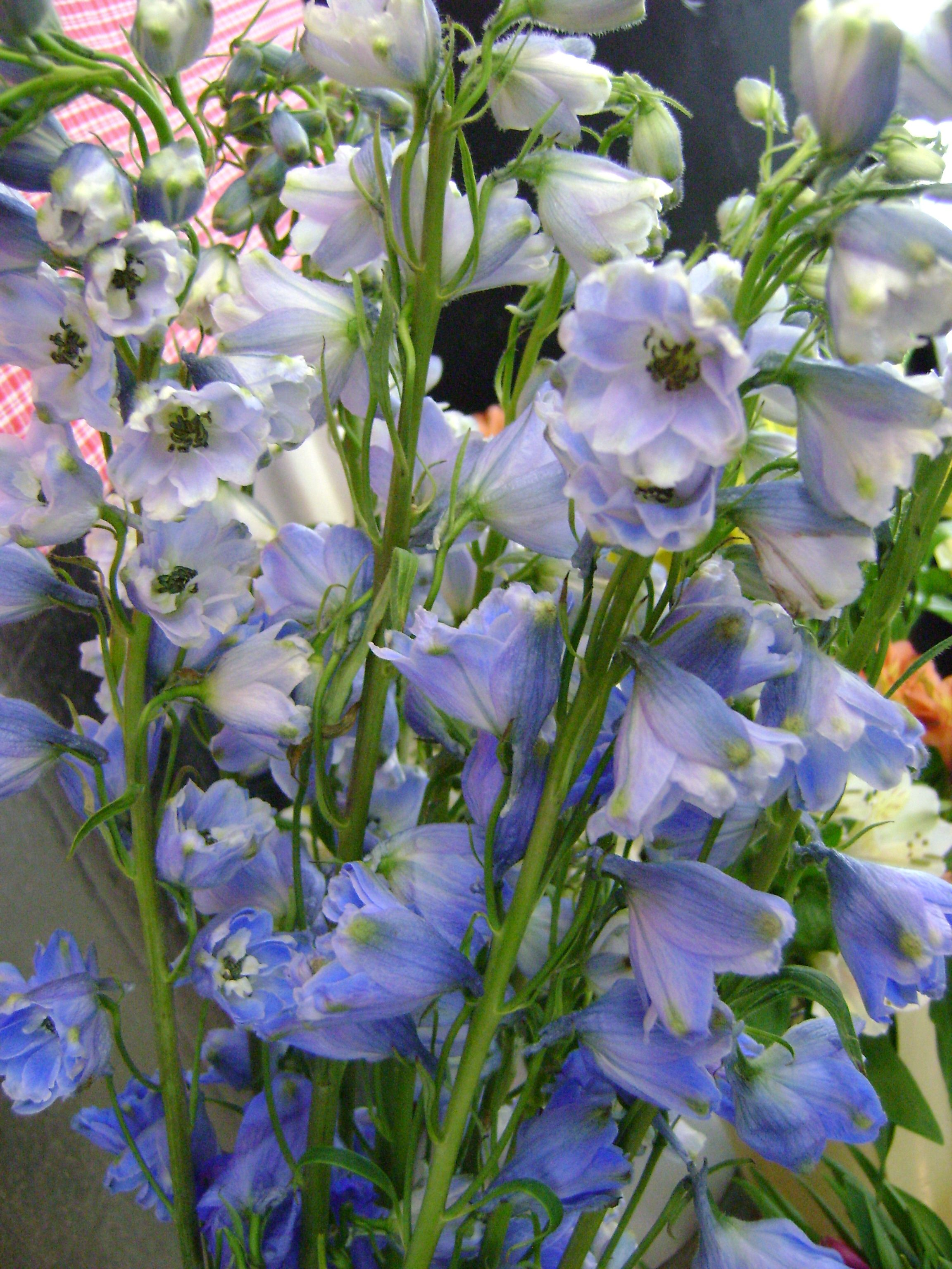 Become Bloom Savvy One Of The Few Naturally Blue Flowers Delphinium