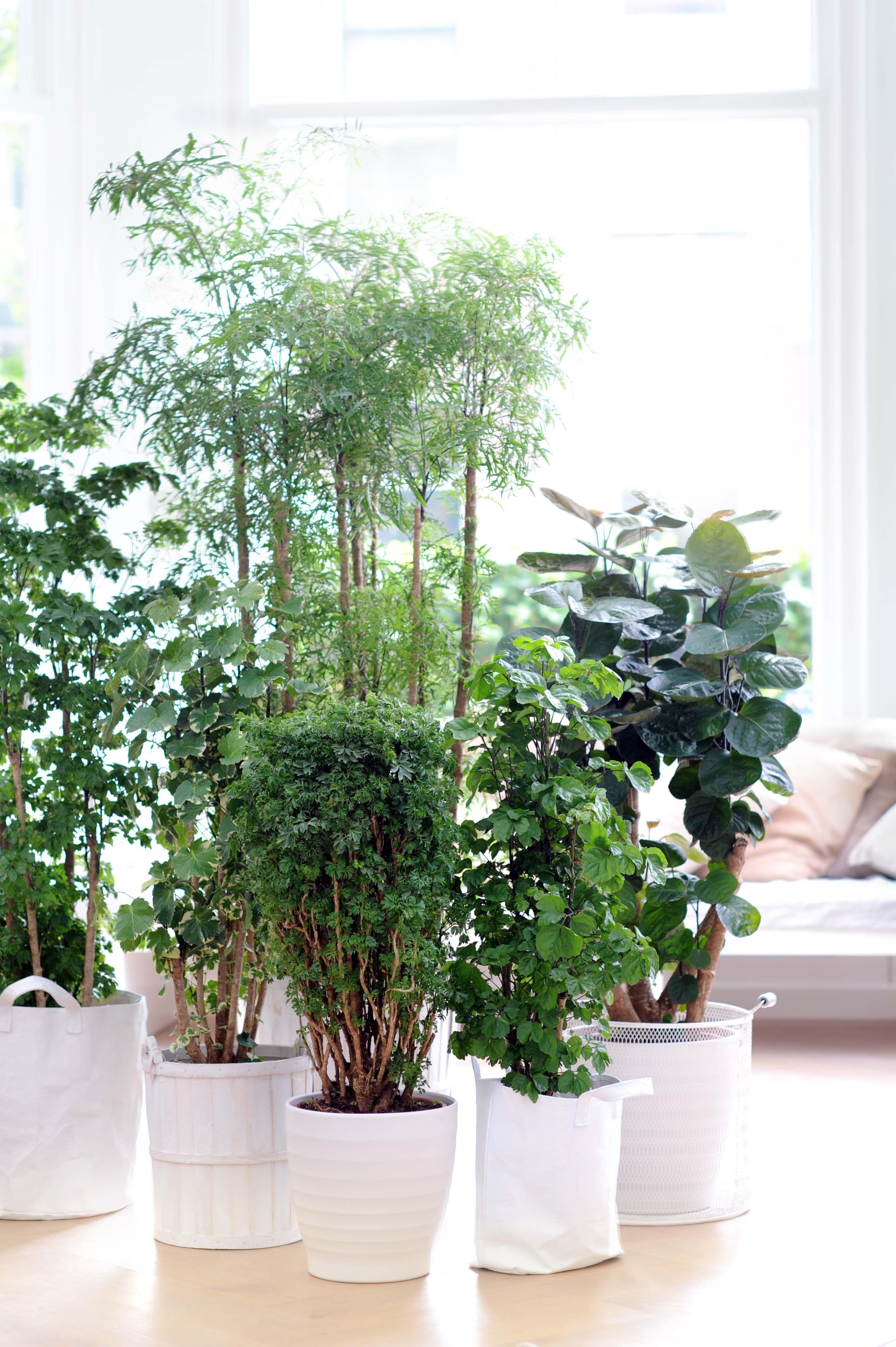 donkere standplaats planten
