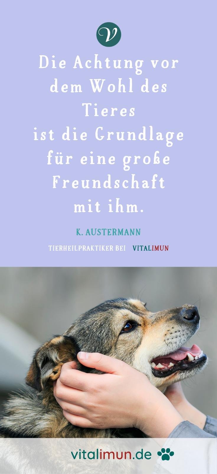 Achtsamkeit Und Fursorge Fur Deinen Hund Mit Krautern Bei Krankheit Naturlich Helfen Zitat In 2020 Tierheilpraktiker Hunde Magen Und Darm