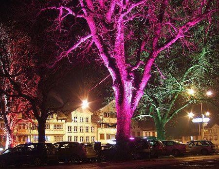 Iluminación no eléctrica a través de las plantas y los árboles - iluminacion jardin
